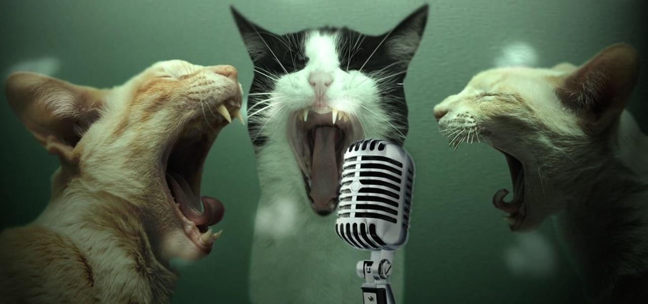 Catskaoke